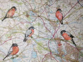 A Bellowing of Bullfinches - A drawing by Pat Rhead-Phillips