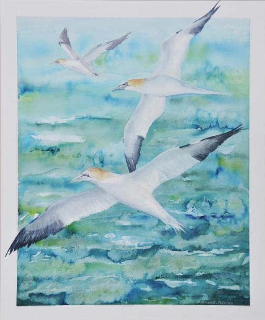 Gannets - an original artwork by Pat Rhead-Phillips - buy artwork