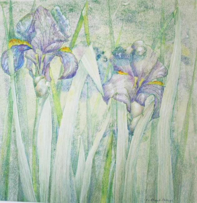 Flag Iris 2 - an original artwork by Pat Rhead-Phillips